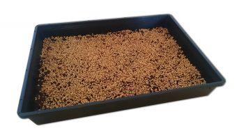 Weizengras aussähen