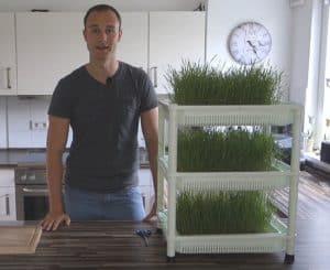 Weizengras anbauen mit dem Sproutman