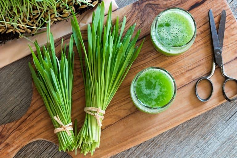 Weizengras-Bündel Weizengrassaft Schere auf Holzbrett