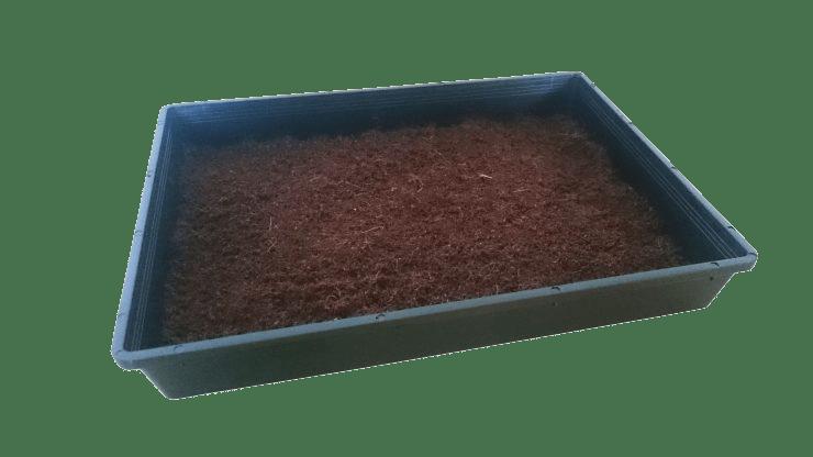 Weizengras mit Kokossubstrat und Schale anbauen